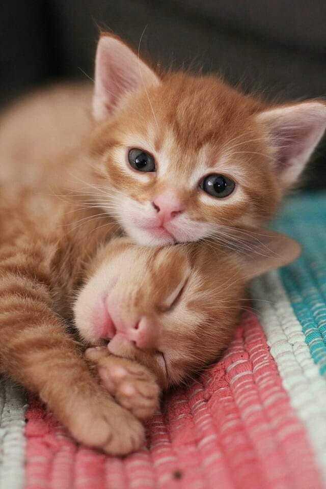 Как воспитать в детях любовь к животным
