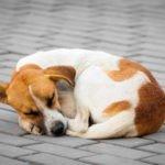 Животное с улицы: проблемы воспитания. Советы для тех, кто решил приютить бездомное животное