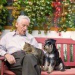 Заботимся о здоровье домашних любимцев в их старости
