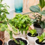 Как правильно ухаживать за комнатными растениями