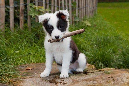 Какие прививки нужны щенкам до года