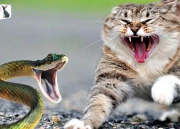 Кот спас девочку от ядовитой змеи, но сам погиб
