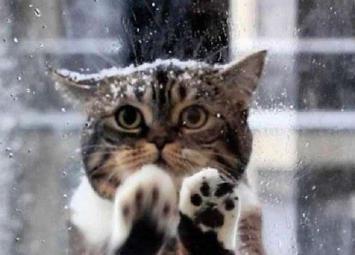 Кошка пришла в кафе просить помощи у людей, ее малыши замерзали на морозе
