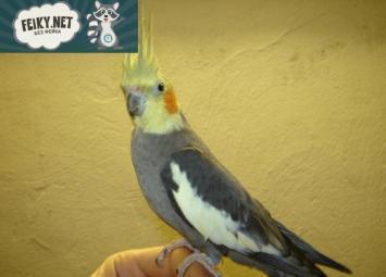 Однажды,  попугайчик по кличке Куки ,спас жизнь своим хозяевам