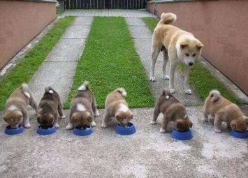Трогательные фотографии мам-собак с их щенками