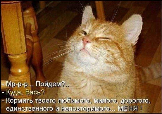 Смешная подборка для хорошего настроения-14 фото