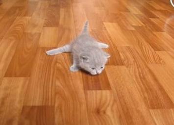 Позитив и еще раз позитив — как маленькие котятки учатся ходить…