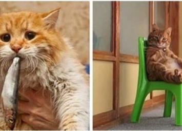 12 очень наглых котов, которых ничто не смущает…