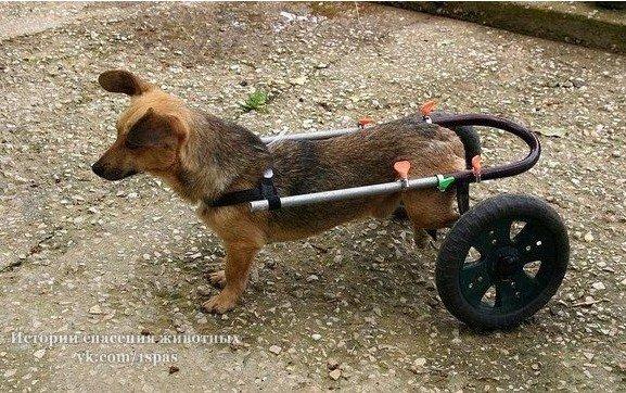 Мужчина забрал с улицы парализованную собаку и смастерил для неё приспособление на колесах