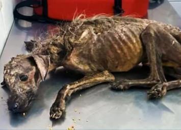 Девушка увидела на дороге собаку, которая была похожа на скелет