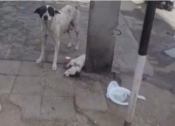 Молодой человек заметил, как встревоженная собака ищет помощи у прохожих