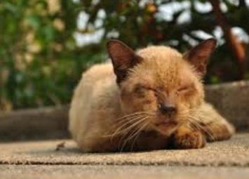 Мужчина подобрал и вылечил избитого,одноглазого котенка