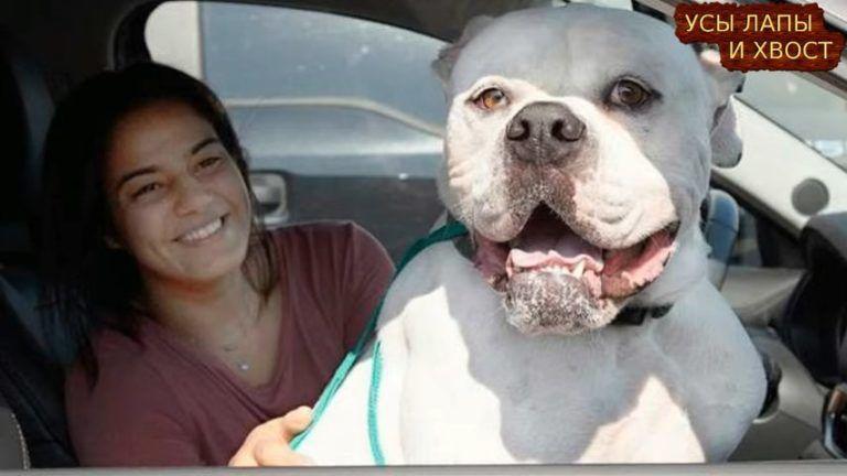 Брошенный пес вжимался в угол вольера в приюте, он не понимал, почему его все бросили