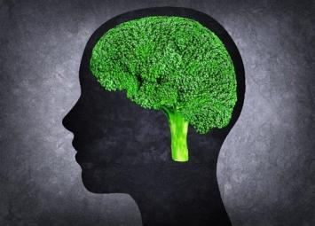 11 продуктов для улучшения памяти и работы мозга