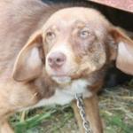 Хозяин пытался избавится от собаки привязав пса к прицепу
