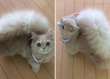 Белль — кошка, которая родилась с величественным хвостом, как у белки