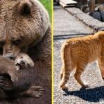Фотографии о родительской любви животных к своим малышам