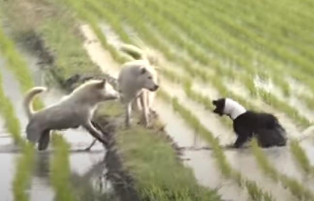 Три месяца жители села пытались поймать чёрную собаку, шея и голова которой плотно застряли в куске трубы